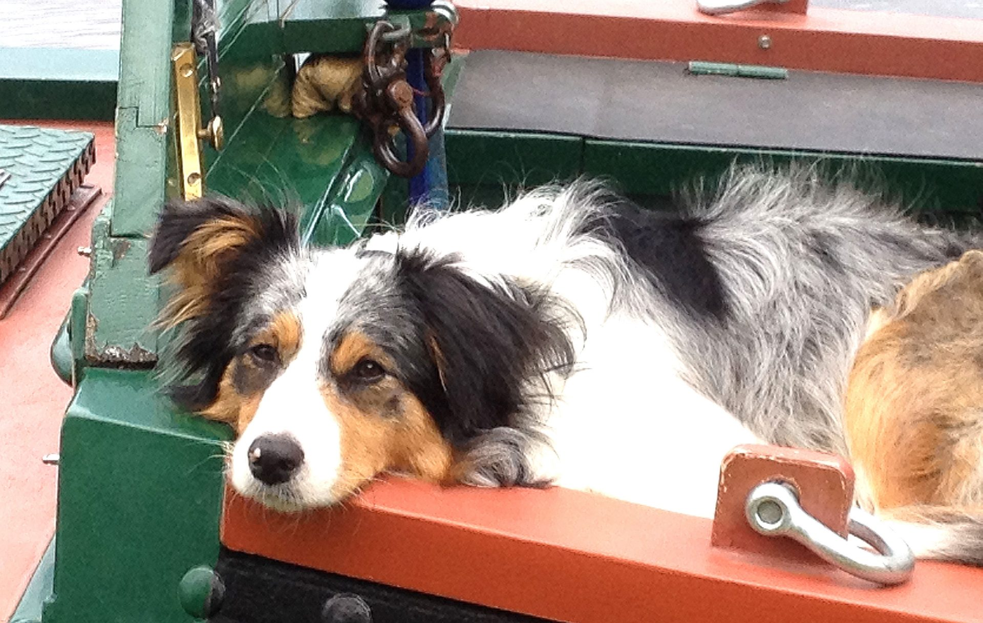 Boat dogs are usually fairly laid back. Just like this one.