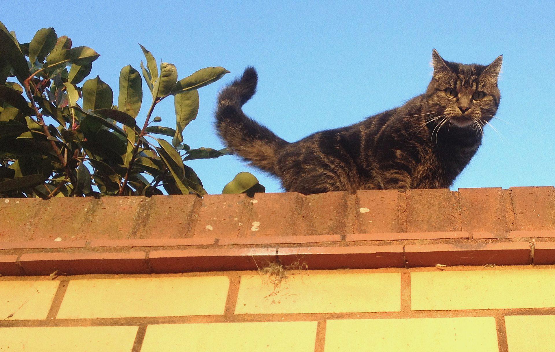 """""""I think I'm safe up here""""."""