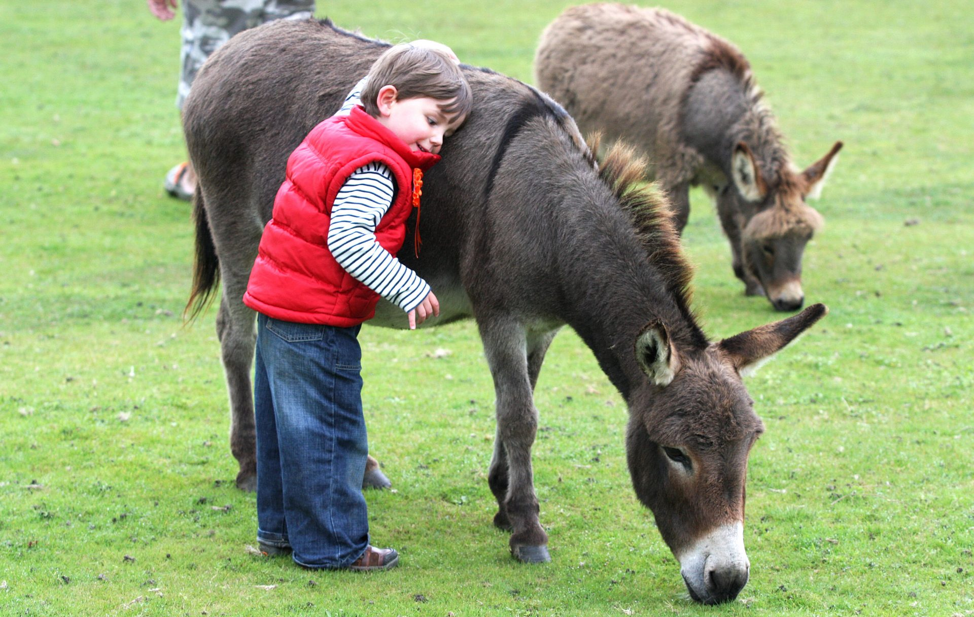 Miniature Pony Centre, Moretonhampstead. Open again now. Yippee !