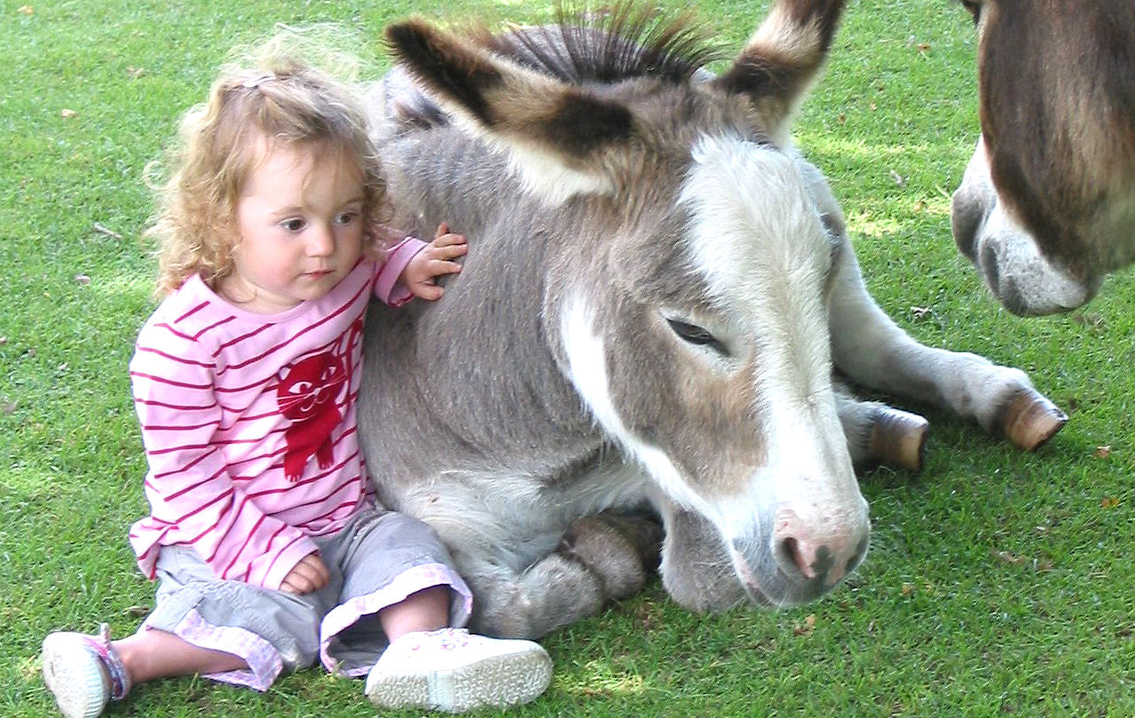 Miniature Pony Centre on Dartmoor. Now happily reopened. Stroking a donkey lowers the blood pressure.