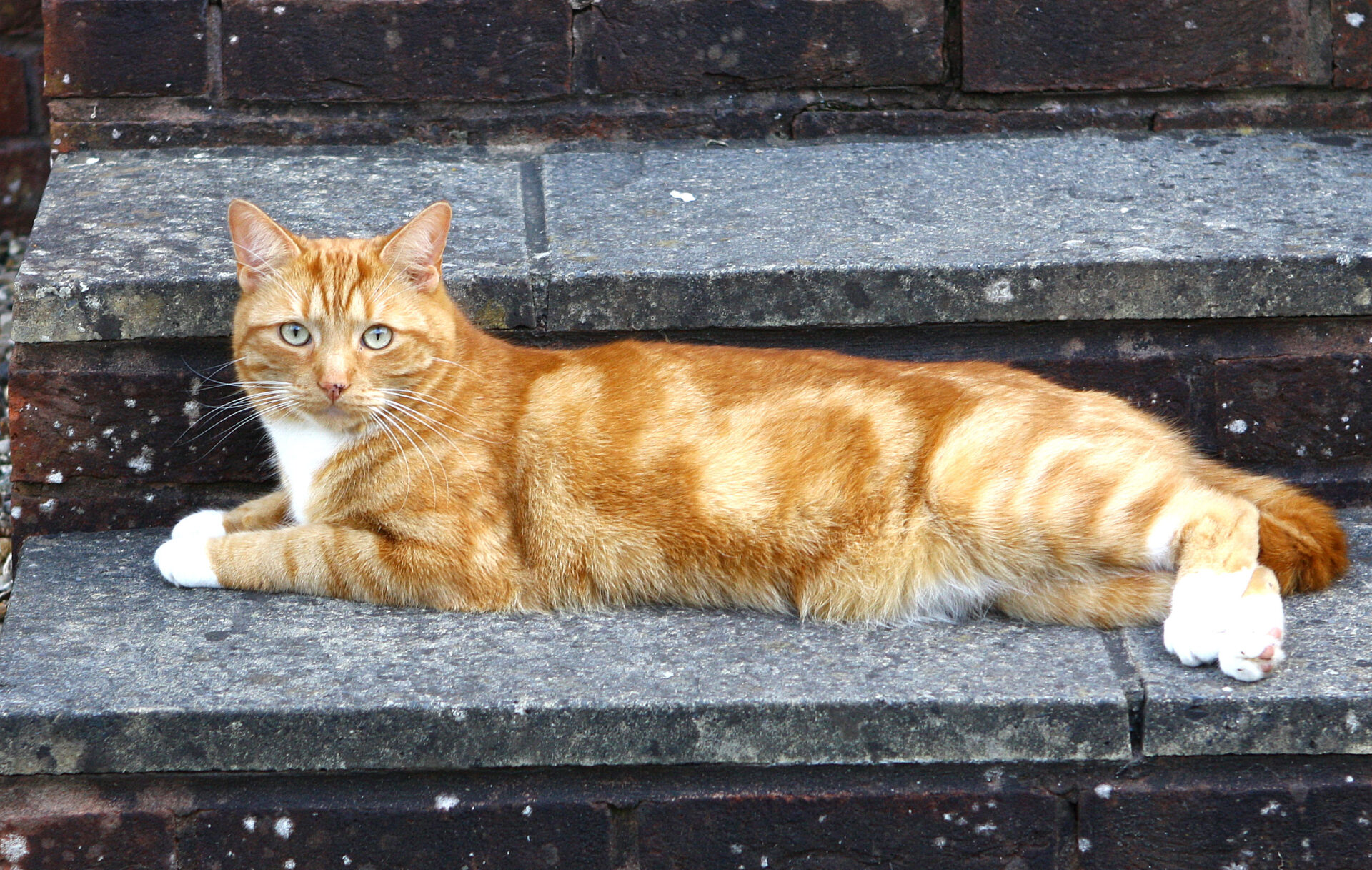 Although they are both reclining on a paving slab at Digby, this and the next photo, are not the same cat.