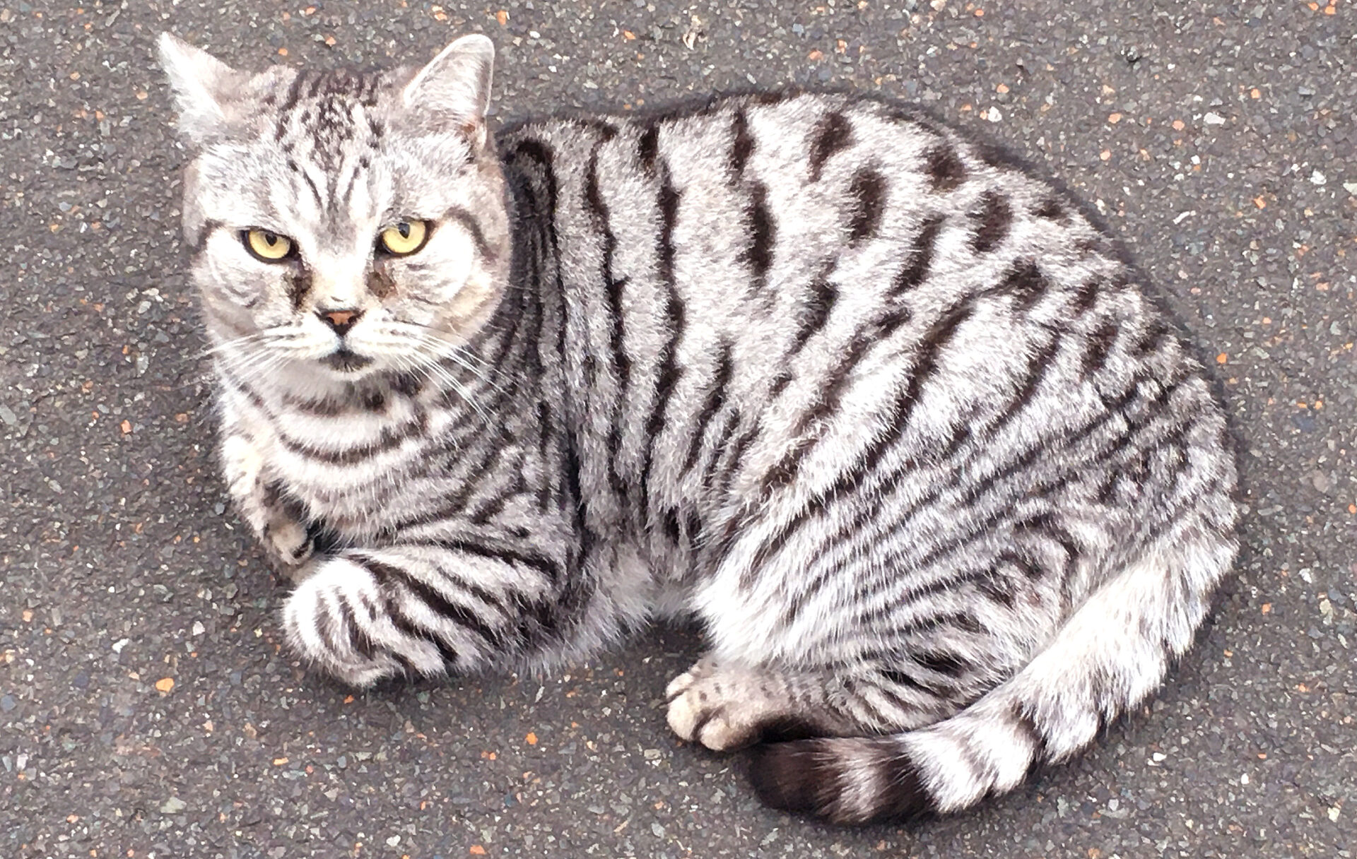 This stripey puss took a dim view of me with my camera.