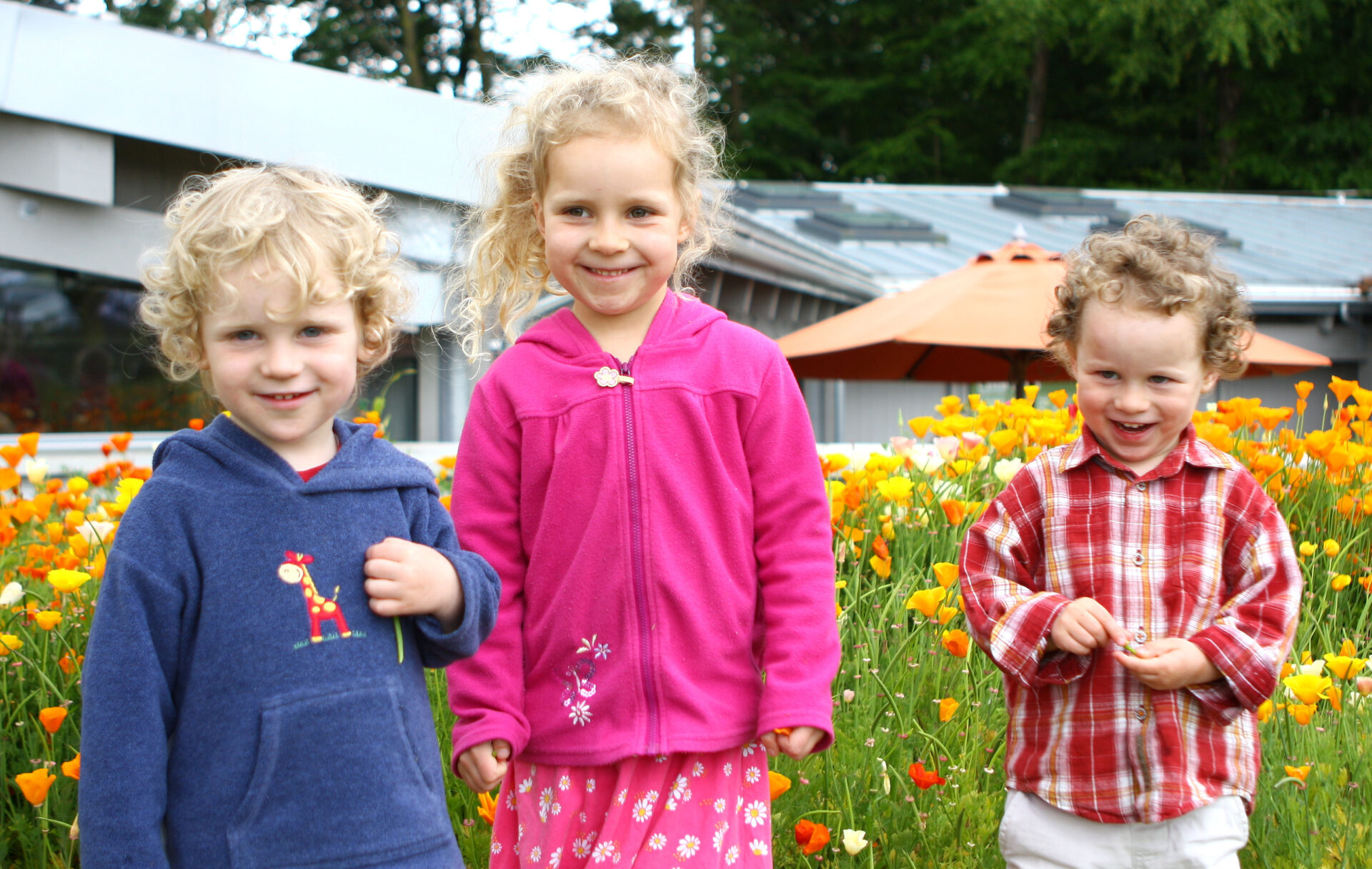 HOLD THE MOUSE OVER THE PIC TO STOP IT MOVING. Sweet youngsters checking out California Poppies at Castle Drogo.