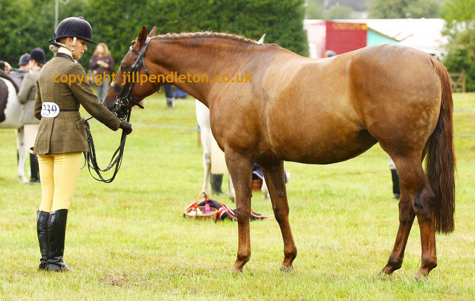 Some say the horse classes are the best thing at Chagford Show.  Whilst for others...